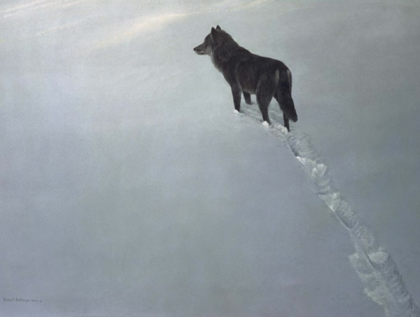 New Territory - Black Wolf - Signed Limited Edition Print by Robert Bateman