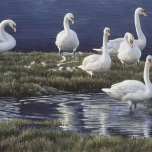 Bank of Swans - Signed Artist Proof Print by Robert Bateman