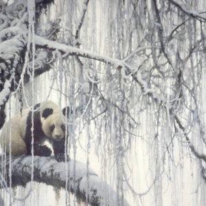 Winter Filigree - Giant Panda - Signed Limited Edition Print by Robert Bateman