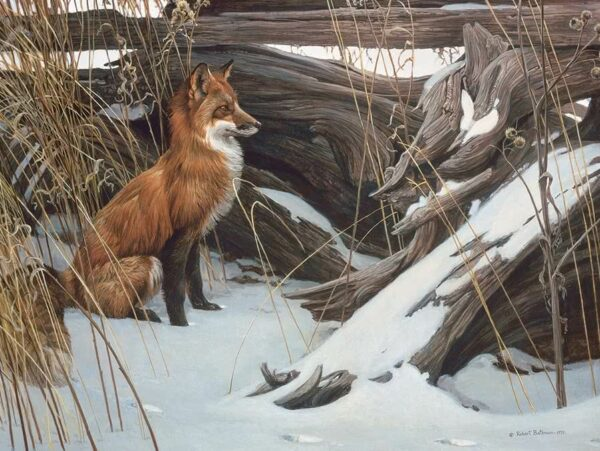 Wily and Wary - Red Fox Robert Bateman Puzzle - 500 Piece