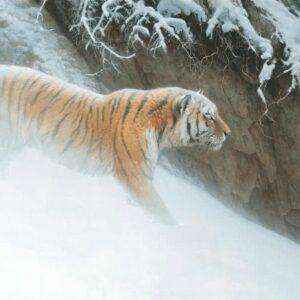 Momentum - Siberian Tiger - Signed Limited Edition Print by Robert Bateman