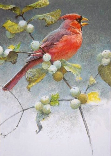 Cardinal & Snowberries - Signed Limited Edition Print by Robert Bateman