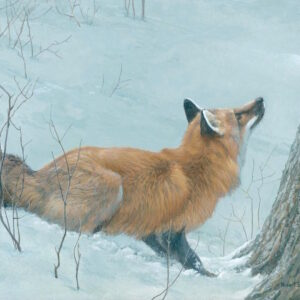 Game Over - Fox and Maple - Signed Limited Edition Print by Robert Bateman