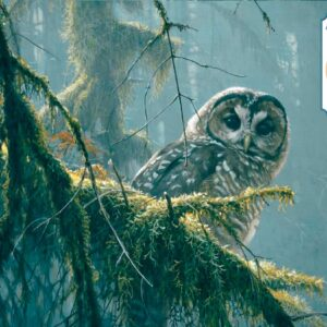 Mossy Branches - Spotted Owl Robert Bateman Puzzle - 500 Piece