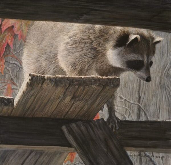 The Prowler - Racoon - Signed Limited Edition Print by Robert Bateman