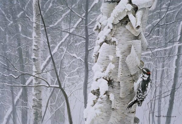 Hairy Woodpecker on Birch - Signed Limited Edition Print by Robert Bateman