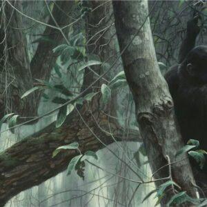 At Mahale - Chimpanzees - Signed Artist Proof Print by Robert Bateman