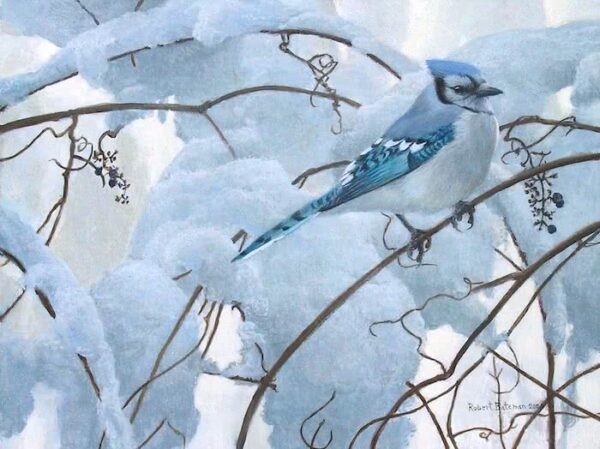 Snowy Morning - Blue Jay - Signed Limited Edition Print by Robert Bateman