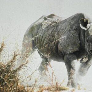Charging Rhino - Signed Artist Proof Print by Robert Bateman