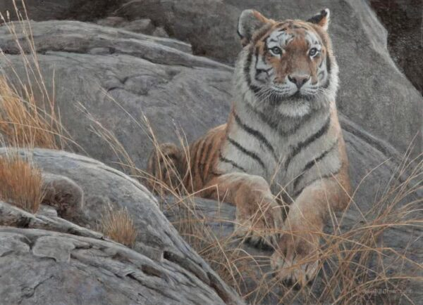 Monarch of Asia - Limited Edition Print by Robert Bateman