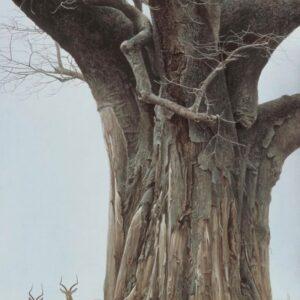 Baobab Tree and Impala - Signed Artist Proof Print by Robert Bateman