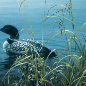 Shoreline - Common Loon - Signed Limited Edition Print by Robert Bateman
