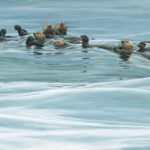Raft of Otters - Signed Limited Edition Print by Robert Bateman