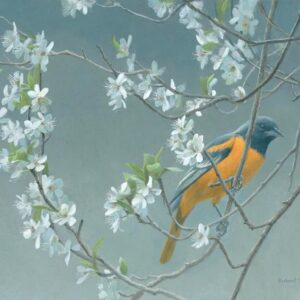 Baltimore Oriole & Plum Blossoms - Signed Limited Edition Print by Robert Bateman