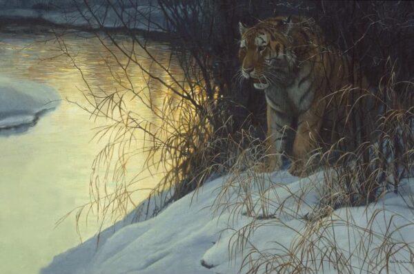Siberian Tiger - Signed Artist Proof Print by Robert Bateman