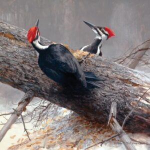 Woodworkers - Pileated Woodpeckers - Signed Limited Edition Print by Robert Bateman