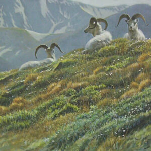 Mountain Meadow Dali Sheep - Signed Limited Edition Print by Robert Bateman