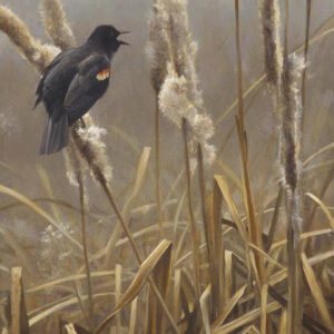 Winter Cattails - Red Winged Blackbird - Signed Limited Edition Print by Robert Bateman