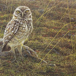 Burrowing Owl - Signed Limited Edition Print by Robert Bateman