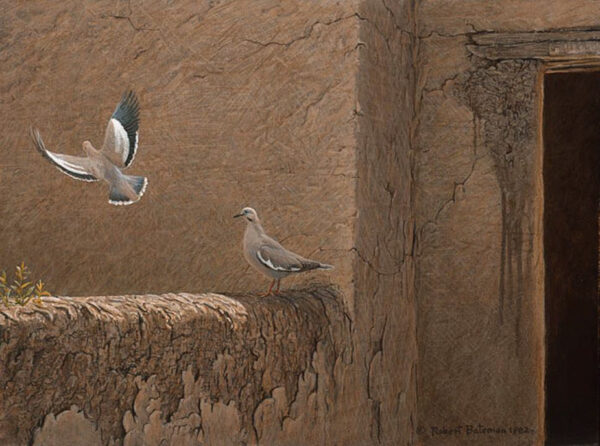 Old Adobe - White Winged Doves - Signed Limited Edition Print by Robert Bateman