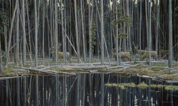 Elk at Yellowstone - Signed Artist Proof Print by Robert Bateman