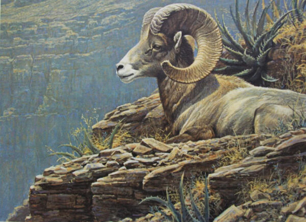 Desert Bighorn - Signed Artist Proof Print by Robert Bateman