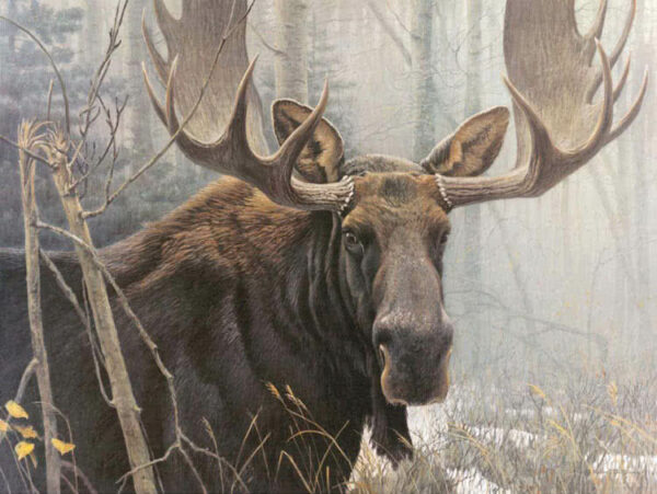 Bull Moose Robert Bateman Puzzle - 500 Piece
