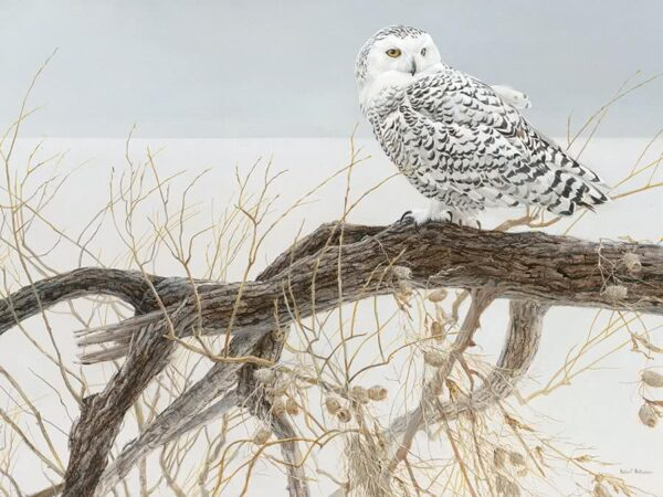 Fallen Willow Snowy Owl Robert Bateman Puzzle - 500 Piece