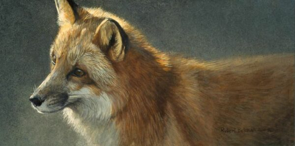 Questing - Red Fox - Signed Limited Edition Print by Robert Bateman