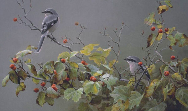 Shrike Pair and Hawthorne - Signed Limited Edition Print by Robert Bateman