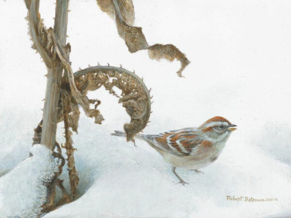Tree Sparrow & Teasel - Signed Limited Edition Print by Robert Bateman