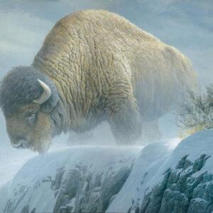 Winter Bison - Signed Limited Edition Print by Robert Bateman